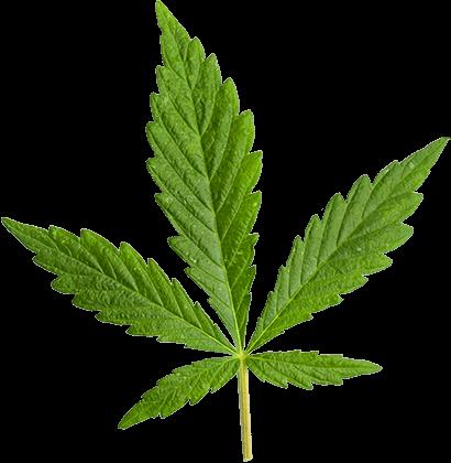 marijuana blade store
